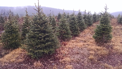tree farm business gaines pa